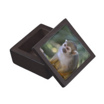 Amazing Squirrel Monkey Jewelry Box