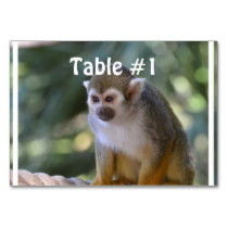 Amazing Squirrel Monkey Table Number