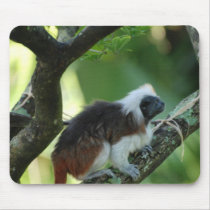 Cotton Topped Tamarin Mouse Pad