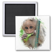 Funny Monkey Picture Magnet