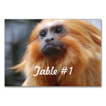 Golden Lion Tamarin Monkey Table Number