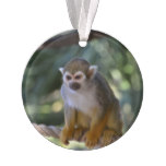 Inquisitive Squirrel Monkey Ornament