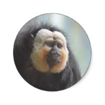 Saki Monkey Classic Round Sticker