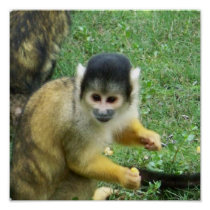 Squirrrel Monkey Poster